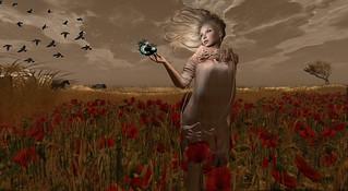 Woman in the spring of its life in a field of poppies - Femme au printemps de sa vie dans un champ de coquelicots