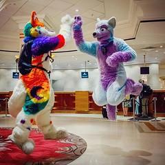 #highfive #purple #blue #fursuiting #charmhusky #keenora #cfz #uk (Keenora Fluffball) Tags: keenora fursuit furry kee