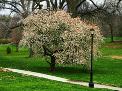 luminescent (Jayne Reed) Tags: trees spring parks kansascity