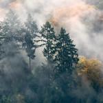 Nebelschwaden thumbnail