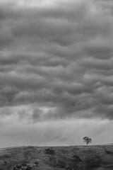 Overcloud (Keith Midson) Tags: tree oatlands cloud clouds lonetree hill tasmania ridge