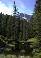 05-IMG_8373 (hemingwayfoto) Tags: österreich alpen austria baum europa felsen fichte gletscher hohetauern landschaft nationalpark natur naturschutzgebiet rauris rauriserurwald reise spitzfichte tannenbaum urwald wald weg