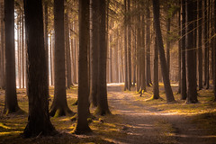A Single Trail (matthiasstiefel) Tags: forest woods trees path way trail weg pfad wald bäume deutschland germany bavaria bayern märchen fairytales enchanted verzaubert lumix gx8 mft microfourthirds