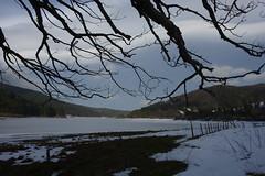 Rigidità / Rigidity (Loredana Consoli) Tags: snow frozenlake lake tree winter lagoampollino calabria