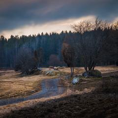 Road / Tie (Olli Tasso) Tags: field pelto road tie tree puu maisema landscape rural countryside maaseutu maalaismaisema suomi finland spring moody pälkäne