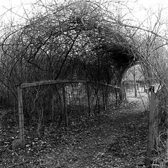 arch, 2012 (doc(q)man) Tags: square blackandwhite bw monochrome fence arch garden yard path road lookingthrough abstract pattern nature grow manmade hole texture wild rhythm gate gateway portal port entrance bush shrub geometrical natural docman