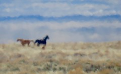 Mirage (prairiegirrl) Tags: farawayhorses stewartcreek hma wyoming wildhorses wildplaces