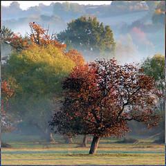 Auvergne, France (pom.angers) Tags: france october 2009 panasonicdmctz3 autumn allier 03 auvergne auvergnerhônealpes europeanunion bourbonnais trees 300 200 150 100 400 5000 500 600