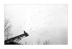 codici di geometria esistenziale ;/) (schyter) Tags: электра112 elektra112 sovietcamera rangefinder automatic cds ломо lomo индустар73 industar73 soviet lens 2840 aperture priority shooting analogica analogic film pellicola 135 35mm analogicait homemade development telemetro pdc tank ap compact lodi lodigiano bw bn bianconero blackwithe fomapan400 adox adonal 137 18 °c scanned monocromo basiasco belvignate