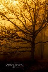 Hazy Daze (Deb Scannell) Tags: trees blueridgeparkway carolinamountainscenes woods fog fineartprints blueridgeparkwayfall mountainscenes carolinalandscape brp2012falltour autumninthesmokies blueridgemountainscenes