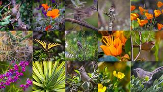 Rancho Santa Ana Botanic Garden Adventure 2017