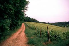Pink skies (elkarrde) Tags: vineyard landscape nature forest trees path sky spring dusk 2016 spring2016 slidefilm colorpositive green expiredfilm velvia olympus olympusis5000 pointshoot fujichrome velvia50 rvp fujirvp fujichromevelvia50 jastrebarsko croatia purple rečkigaj