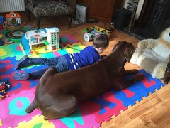 Red Doberman Zeus and Friend in the Playroom. (firehouse.ie) Tags: april152017 ripzeus tan brown red puppy k9 pinschers pinscher dobermann doberman dobermanns dobermans dobeys dobey dobies dobie dobes dobe zeus