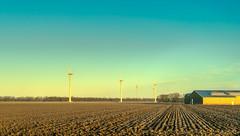 The winds of the West. (Alex-de-Haas) Tags: 50mm d5 hdr holland hollandseluchten nederland netherlands nikkor nikkor50mm nikon nikond5 noordholland thenetherlands westfriesland akker arkkers beautiful beauty boerenland buiten buitenshuis daglicht daylight farmland grasslands handheld highdynamicrange landscape landschap licht light meadow meadows mooi morning ochtend outdoor outdoors polder schoonheid skies sky sunrise sunriselight warm weiland weilanden windenergy windmills windturbines windenergie windmolens winter zonsopgang