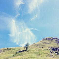BergSichten aus dem Wallis #20 - THE END (Miri Berlin) Tags: schweiz switzerland wallis valais landscape landschaft baum mountains berge miriberlin