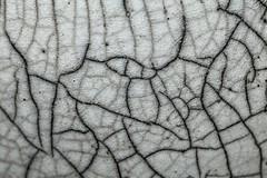 Raku Glaze on a Bowl (j.towbin ©) Tags: allrightsreserved© glaze pottery ceramic raku crackle crackleglaze macro lines bowl abstract img1772