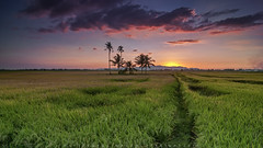 Permatang Bogak (Hafiz.Soyuz.Photography™) Tags: nature landscapes sunset evening village farm paddy fields penang nikon tokina singhray filter green clouds lee sun trees