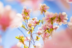 Spring and Summer (icemanphotos) Tags: abstract green magnolia sunlight meadow solitude zen y