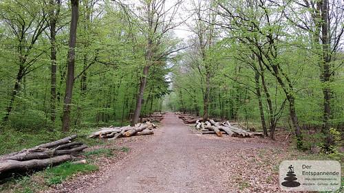 Forstwirtschaft im Ober-Olmer Wald