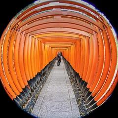 Rachel in the Torii Gates [Explored] (Roland Bogush) Tags: canoneos5dsr canonef815mmfisheyellens orange fushimi inari shrine