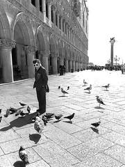 Elegant sunday Veneziana (Izzy's Curiosity Cabinet in Venice Mood) Tags: venice venise venedig venezia portrait place saint marc piazza san marco birds oiseaux man homme