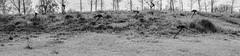 Demons run (1 of 1) (R'lyeh Imaging) Tags: nikon d750 groundsforsculpture panorama bw blackwhite sculpture