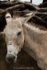 IMG_1582-2 (gustavogrocha) Tags: cavalo roça galinha nordestino campo brasil cerca burro dilma pt menina mulher família igreja