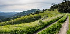 Mindego Panorama (Matt McLean) Tags: bayarea california hike hiking hills landscape midpeninsula mindegohill openspace panorama path russianridge trail lahonda unitedstates us