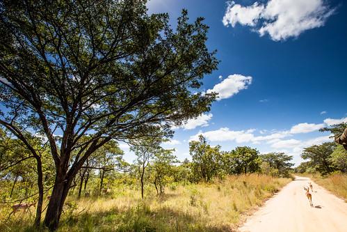 KrugerParkREIZ&HIGHRES-66
