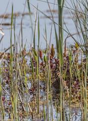 9Q6A5223 (2) (Alinbidford) Tags: alinbidford alancurtis brandonmarsh greyheron greylaggoose snipe moorhen yellowwagtail