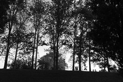 (Stella Trasforini) Tags: trees blackandwhite iphone6s streetphotography fineartphotography