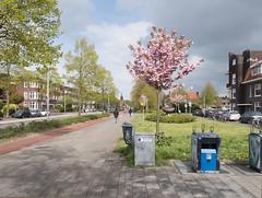 Korreweg (Jeroen Hillenga) Tags: korrewegwijk korreweg groningen netherlands nederland stad straat streetwise street straatfotografie streetphotography voorjaar lente