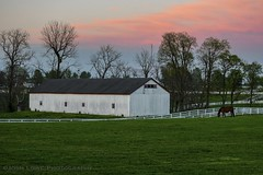 """A Bluegrass Sundown"" (the_lowe_life) Tags: nikond7200 nikkor d7200 nikon keeneland southernliving horsefarm spring photography afterglow clouds green thebluegrassstate barn field sunset kentucky lexington thoroughbred farm horse"