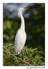 Long Neck Dude (wesjr50) Tags: canon 7d mk ii flash betterbeamer photoshopcc dxoopticspro rookery wadingbirds naturewildlife staugustinealligatorfarm