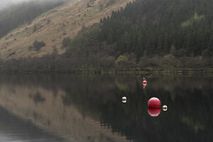 The Hitcher (Click And Pray) Tags: managedbyclickandpraysflickrmanagr locheck landscape landscapeformat argyll scotland loch lake reflection calm seagull buoy forest hillside coylet lochecklandscapelandscapeformatargyllscotlandlochlakereflectioncalmseagullbuoyforesthillsidecoyletgbr