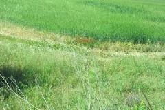 Wednesday Colours - Going to a Farm (Pushapoze (nmp)) Tags: italy italia sicilia castelluccio farm ferme fattoria