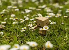 Danbo and Daisies (Jason Merrin 'Man With Camera') Tags: manchester bokeh d800 danbo danboard