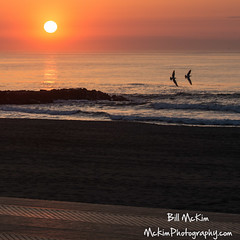 GJ1A6725-2 (Belmardays) Tags: seagulls sunrise newboardwalk