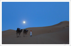 And the night surprised us... (Miguel S. V.) Tags: moon night noche desert dromedary luna camel desierto camello merzouga dromedario