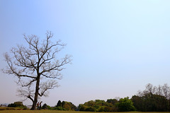 Day Four - An early spring walk (Agumi555) Tags: park sky japan walking nara