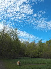 Out for a Stroll (cjh44) Tags: morning ontario clouds chow dogpark tobias kington