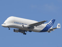 AIRBUS BELUGA (trevdry2) Tags: airport aircraft airplanes virgin airline airbus british airways beluga