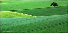 zigzag (Lutz Koch) Tags: road tree green field germany deutschland hessen pentax path feld tele taunus baum zigzag feldweg acker hesse telelens idstein zickzack teleobjektiv fieldpath idsteinerland elkaypics