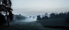 Panoramic of mist in Knole Park (H Snyder) Tags: park trees mist forest dawn valley ferns nationaltrust predawn knolepark longgrass lonefigure valleyfloor