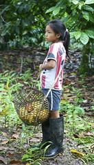 Girl with cacao (Annwenders) Tags: nature girl ecuador amazon cacao