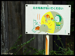 A picture says it all (DameBoudicca) Tags: sign japan zoo monkey mono tokyo feeding ueno  nippon  apa  japon giappone tiergarten nihon warningsign skylt tokio  singe  japn segno uenozoo warnschild djurpark giardinozoologico parczoologique matning   jardnzoolgico onshiuenodbutsuen segnaledipericolo sealesdeadvertenciadepeligro