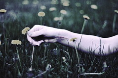 (emmakatka) Tags: summer flower film girl grass tattoo hand arm dandelion wrist scar forearm dontpanic