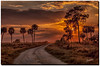 Old dirt roads are the best roads to go down. (jeannie'spix) Tags: sunset flickr florida 2013 dinnerislandranch dinnerisland owlcountry dinnerislandsunset
