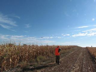 South Dakota Pheasant Hunt - Pierre 25