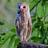 Trevsbirds icon